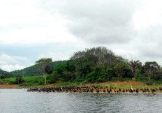 Beautiful Lake Bayano