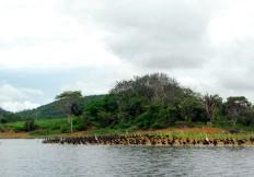 Hermoso Lago Bayano